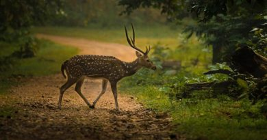 Nagzira-Wildlife-Sanctuary-Nagpur