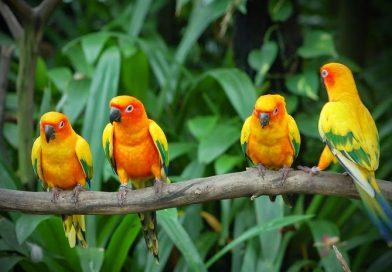 Karnala Maharashtra – Karnala Bird Scantuary,Karnala Fort best weekend getaway