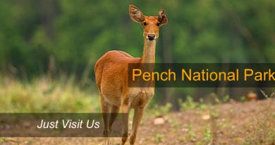 pench wildlife scantuary